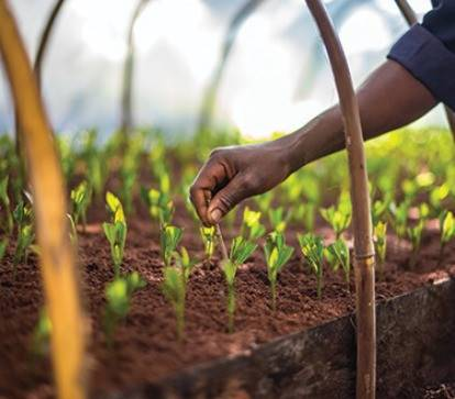 Sustainability carousel slide mobile image